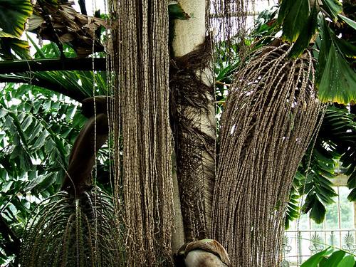 hairy palms