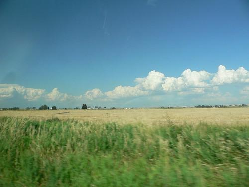 SE Idaho wheat fields