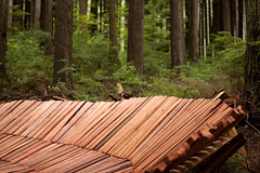 Fresh Cedar (project-b) Tags: mountain bike north shore cedar mtb freeride bobsled fromme
