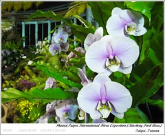 R0018283 (i。Shain) Tags: travel taipei 2011 台北花博 taipeiinternationalfloraexposition 新生園區 xinshengparkarea