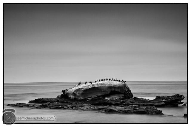 Bird Rock 82311 © Michael Klayman-001