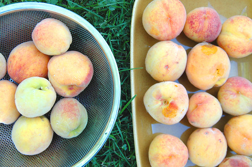 day 2608: The Great Peach Harvest. II.