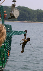Lobstering on The Lucky Catch
