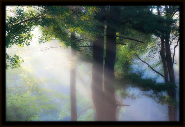 Morning sunlight falls softly