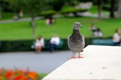 what the hell are you looking at? (just maryse) Tags: paris france pigeon trocadero 2011