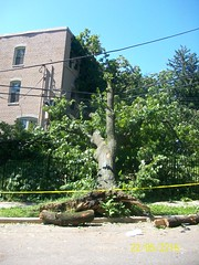 3000 Blk 30th St SE (DDOTDC) Tags: washingtondc dc hurricane irene ddot downedtrees hurricaneirene dcirenedamage