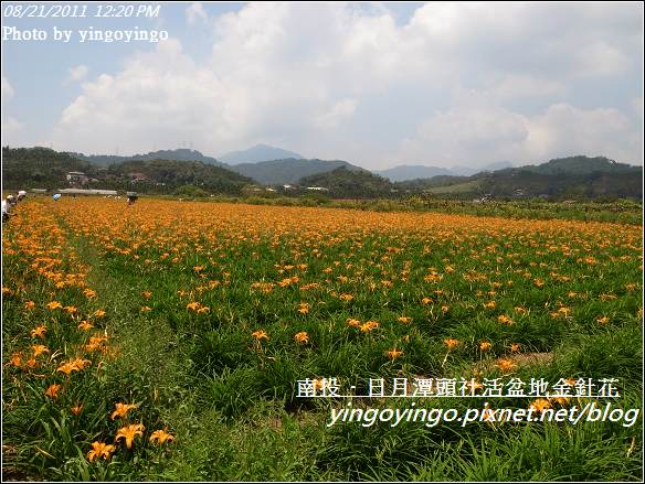 南投魚池_頭社活盆地金針花20110821_R0041574