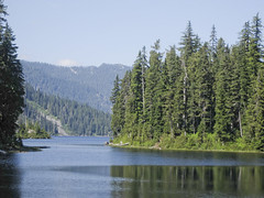 Dorothy Lake conifer forest (Jrk3) Tags: dorothylake alpinelakeswilderness wahiking