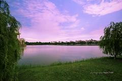 Silence (Sajjad Tufail ( in KL )) Tags: trees lake tree green water digital landscape photography silent silence malaysia jaya putra sajjad tufail