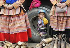 18_LAO71330042 (TC Yuen) Tags: vietnam sapa hmong terracefarming locai