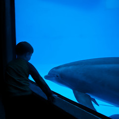 Eye Contact! (It's my whole damn raison d'etre) Tags: blue alex water aquarium harbor nikon dolphin baltimore inner national d300s erkiletian