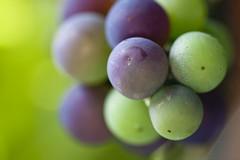 Fruity Balloons (Djenzen) Tags: food fruit healthy balloon grape