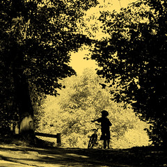(Explored Front Page) (. Jianwei .) Tags: light shadow tree monochrome bike silhouette yellow vancouver contrast kid triangle kevin helmet streetlife shade 365  portmoody  a500 oldorchardpark jianwei explored  kemily truthandillusion