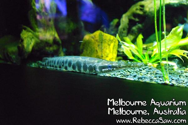MELBOURNE AQUARIUM-31