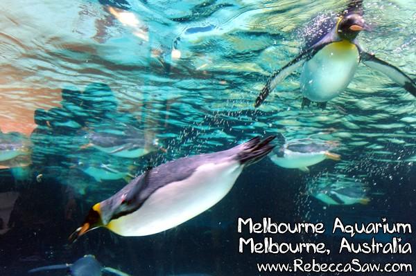 MELBOURNE AQUARIUM-17