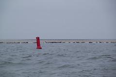 Seals on the 'Blauwe Balg'