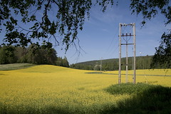 Turnip rape field in July at Julkula, Kuopio - 2 (J-P Korpi-Vartiainen) Tags: city summer flower nature beautiful field yellow electric rural finland landscape countryside scenery europe view blossom hill july august vegetable line oil electricity production suburb mast agriculture finnish northern idyllic lakeland hilly kuopio maisema kes luonto rapeseed cultivate linja kaupunki keskuu kukka tolppa heinkuu maaseutu pelto nkym shk kaunis kukkiva niitty keltainen kesinen mki shklinja rauhallinen mkinen rypsi rypsipelto maalaismaisema julkula maanviljely niuva esikaupunki shktolppa pohjoissavo viljapelto viljely idyllinen kumpuileva ljykasvi jpko kasvintuotanto kasviljy lnsipuijo