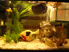 fish plant water real aquarium log lily tank head buddha fake floating fresh egyptian betta freshwater