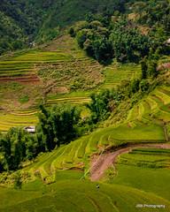 Terraces (J.B.B. Photography) Tags: field asia rice terrace north terraces vietnam hanoi minority sapa hmong paddies