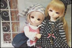 IMG_9427 (Circle@hk) Tags: little blossom monica honey lucile leeke