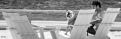 bull dog chillin @ sugar beach (*bomben*) Tags: street city urban blackandwhite bw dog white toronto canada black beach photography photo nikon downtown day photos bulldog explore d90 sugarbeach 3556 18105mm nikond90