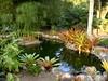 DSC02703 (rantavani) Tags: plantas tropicais
