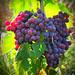 Los frutos de la santidad