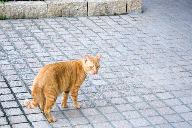 Today's Cat@2011-09-18