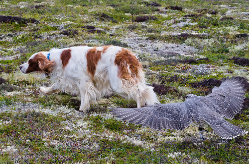 Bird Chases Dog by Andrea Pokrzywinski