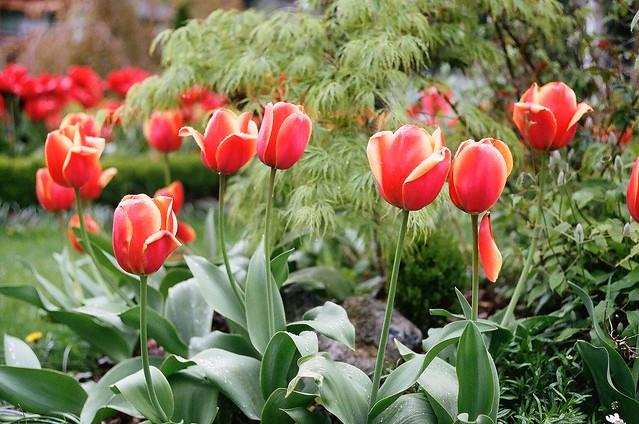 Dodd's garden