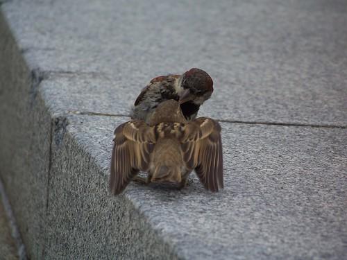 Mama bird feeding baby bird