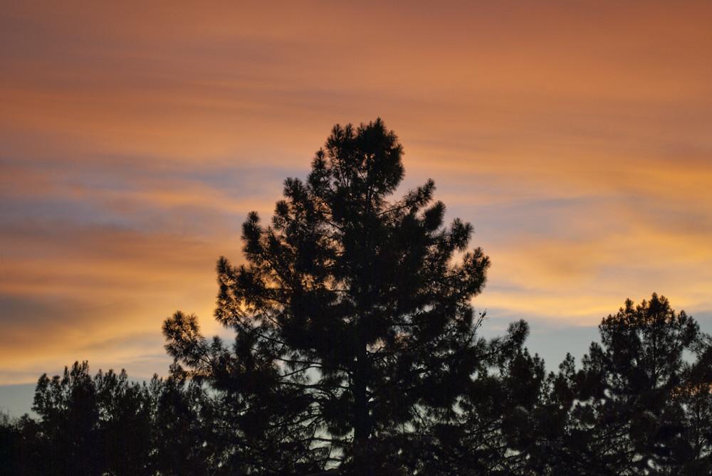 Tree Sky 1