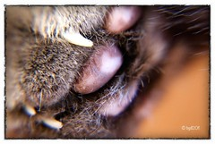 Well Worn! (BGDL) Tags: pet macro cat paw nikon manualfocus macrolicious d80 ourdailychallenge snapseed