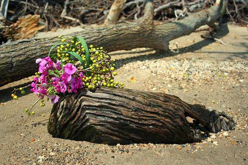 Driftwood ikebana