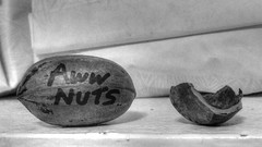 Awwwww Nuts! (slim-tx) Tags: you nuts aww nutcracker sick nutty awwwww nutcase nutritious nuttiness nutshot crackingnuts dontplaywithyourfood awwnuts nutshots crazygonuts nutified