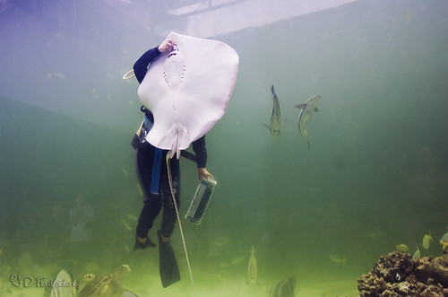 stingray feeding800