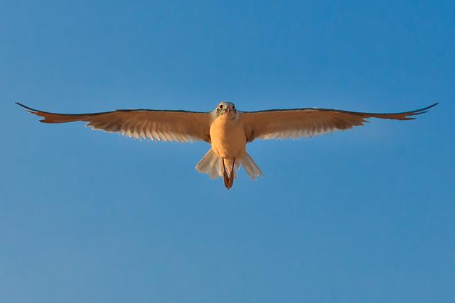 231/365 - August 19, 2011 - Wingspan