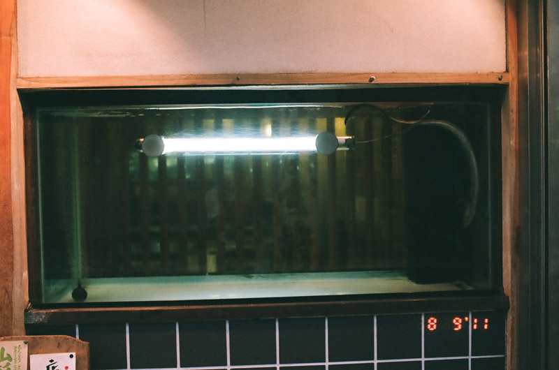 eel (4 of 11)