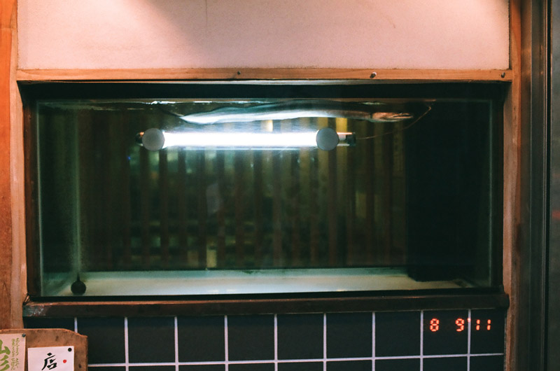eel (3 of 11)