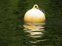 floating (Szymek S.) Tags: canada water britishcolumbia vancouverisland pacificocean inlet float buoy bamfield barkleysound buoyant grapplerinlet