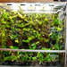 Orchid cool vivarium