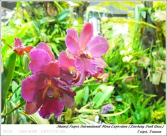 R0018281 (i。Shain) Tags: travel taipei 2011 台北花博 taipeiinternationalfloraexposition 新生園區 xinshengparkarea