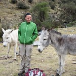 "Claudia and The Mules/Donkeys <a style=""margin-left:10px; font-size:0.8em;"" href=""http://www.flickr.com/photos/14315427@N00/6079908810/"" target=""_blank"">@flickr</a>"