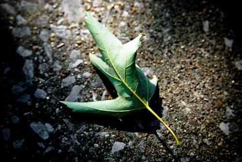 Leaf down