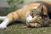 Douchka, M'chicha, Mounette, Pina et les autres (jacques pasqueille) Tags: cat kat chat gato katze 猫 gatto kot gat 貓 mèo кошка قط קאַץ