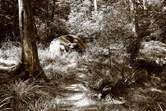 "_MG_0964 ""Broadside"" by Rick Kirby (lee.45) Tags: wood trees blackandwhite sculpture tree garden landscape mono landscapes blackwhite leaf woods flora surrey lonetree britishcountryside sigma1020mm canoneos400d broadsidebyrobward"