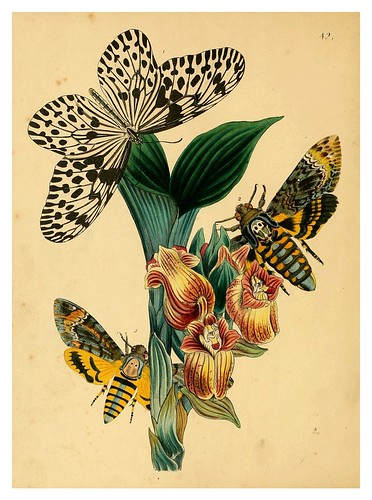 018-The cabinet of oriental entomology…1848- John Obadiah Westwood