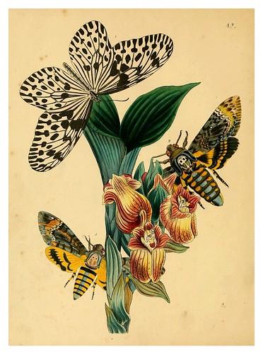 018-The cabinet of oriental entomology…1848- John Obadiah Westwood