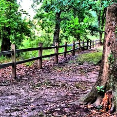 TGIFenceFriDaY (sherrYgibsoN~here & there...) Tags: apple fence square mac texas squareformat sherry normal 4g iphone inthepark hff 2011 westcolumbia firstcapitolpark iphoneography fencefriday instagramapp uploaded:by=instagram foursquare:venue=4d86c54de83fa143a24397a1