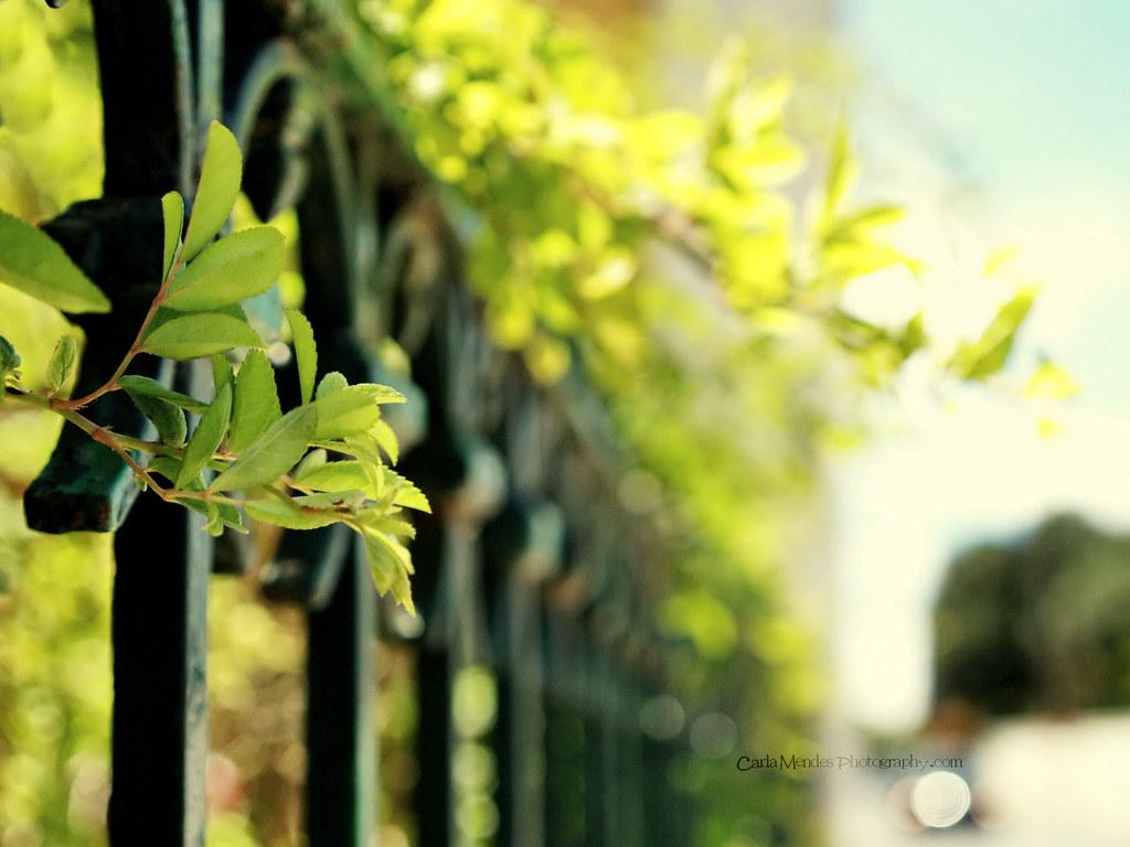 light fence
